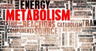 Dieta Metabolica: Cosa è, Come Funziona?