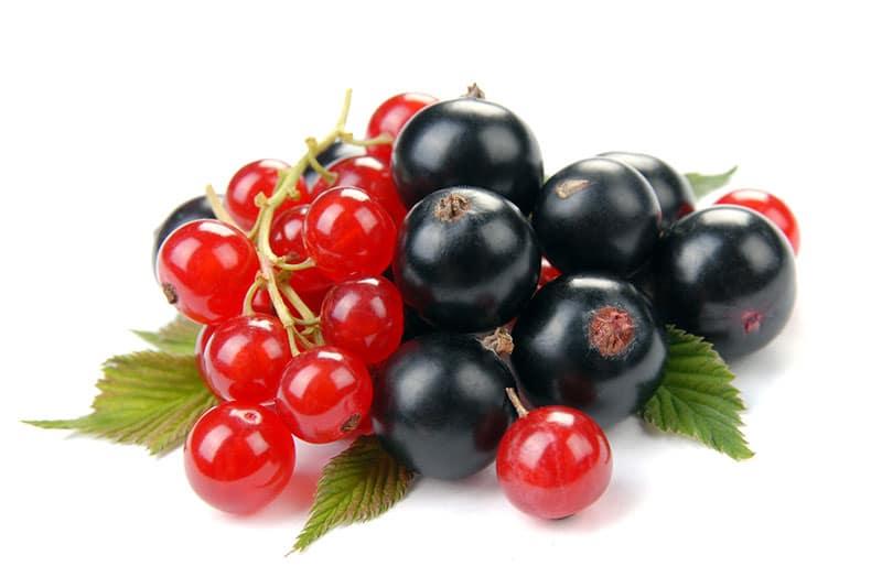 Ribes, Ribes Nigrum, Ribes Rosso Proprietà e Benefici?