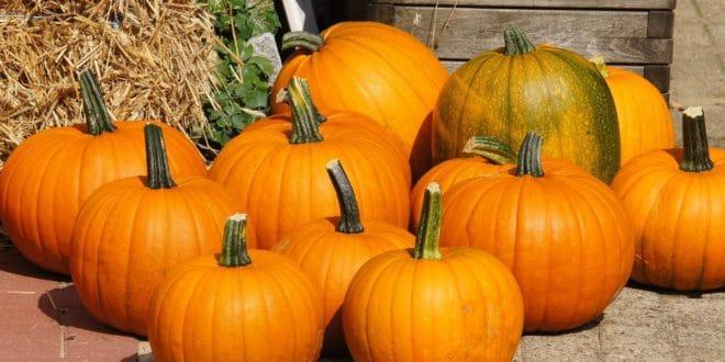 Ottobre Frutta e Verdura di Stagione: Come Riconoscerla?