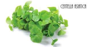 Centella Asiatica - Proprietà e Benefici