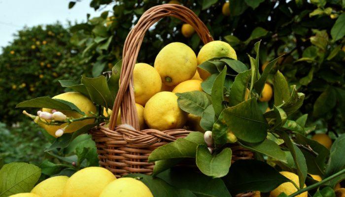 le proprietà del limone per perdere peso